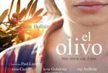 el_olivo-corto